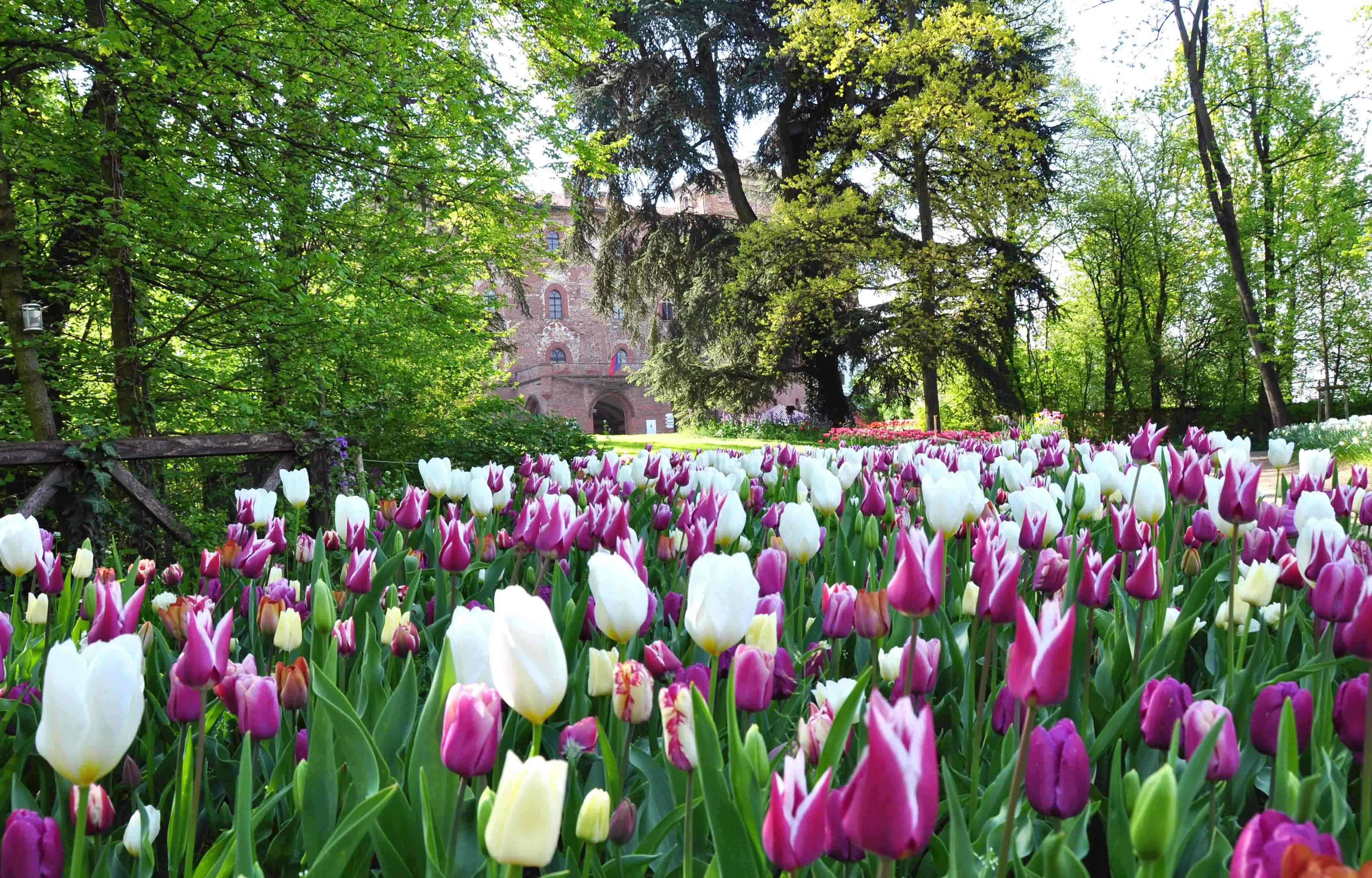 Rose Rampicanti Senza Spine messer tulipano a pralormo. e il parco si tinge di rosa, dal