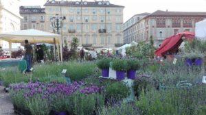 Fiori Torino.Torino Flor Trasforma Il Centro In Un Giardino Per Un Week End