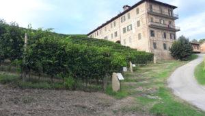 Langhe e Roero, terre dei vini piemontesi