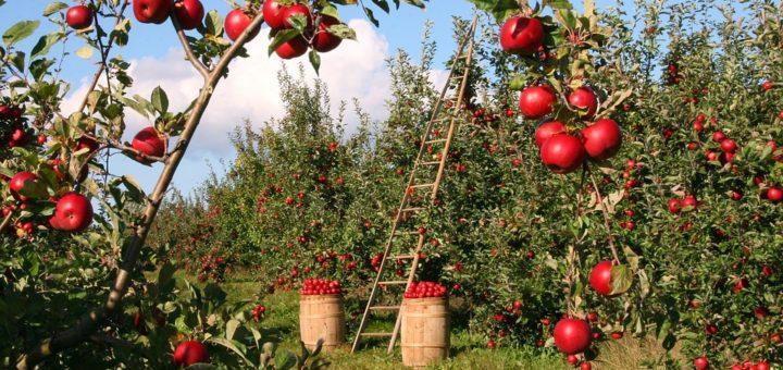 frutteto protocollo d'intesa
