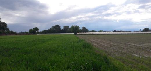 Agricoltura bandi Regione Piemonte
