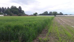 Bandi regione Piemonte agricoltura Distretto del Cibo