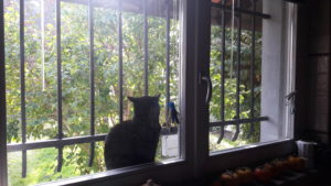 Gatta alla finestra