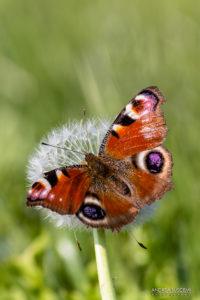 Prendere Farfalle Andrea Buscemi