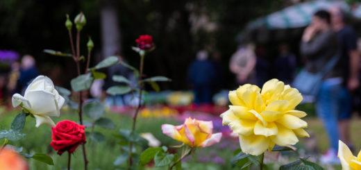 fiori e vini
