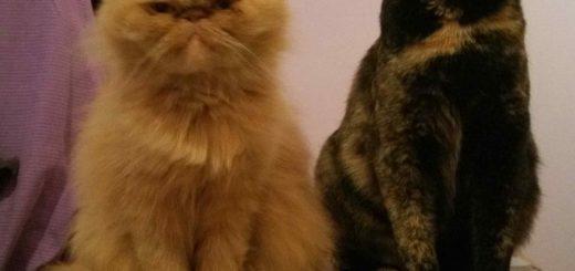 Storie di animali, amore e amicizia: Olly