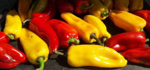 Gialli e rossi, peperoni di Carmagnola