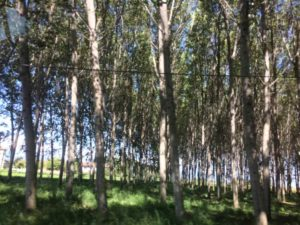 I boschi in cinque video