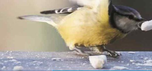 SOS uccellini selvatici
