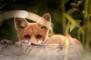 animali selvatici feriti