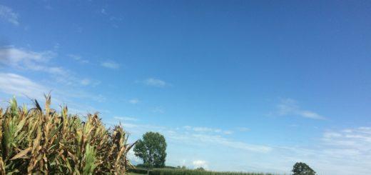 aria piemonte scape aziende agricole