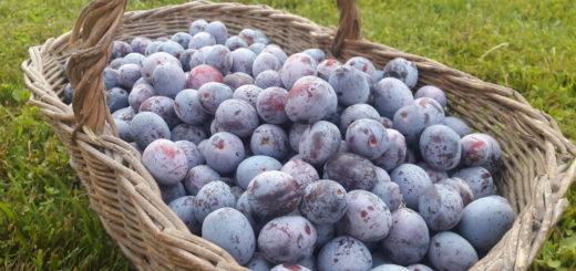colori d'estate viola frutta