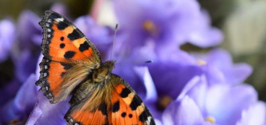 alla ricerca delle farfalle