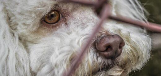 animale diritto e castigo settembre