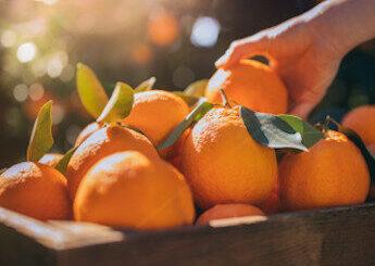 arance airc