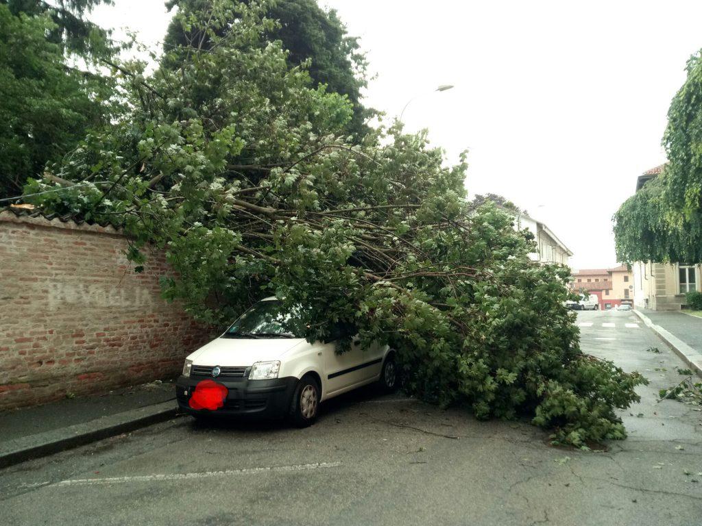ramo caduto in via roma