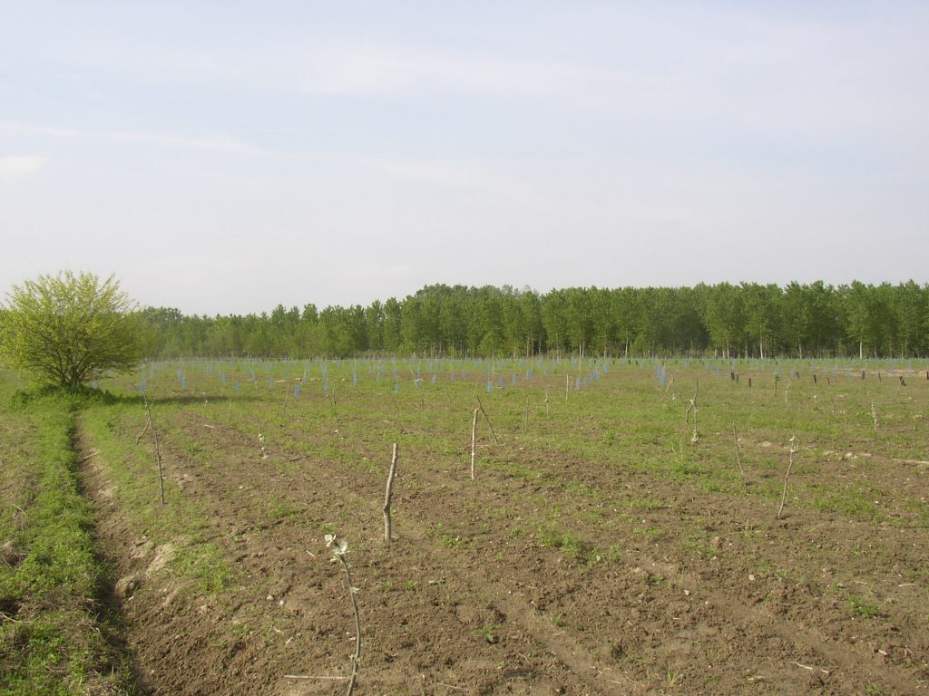 foresta condivisa